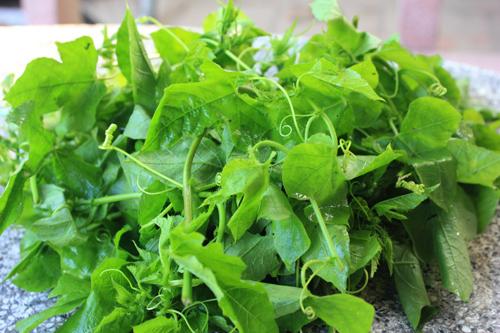 Những loại rau dân dã trong ẩm thực miền Tây